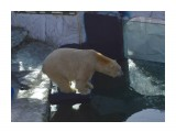 Название: медведь по имени ХАБАР Фотоальбом: скотинки встречные Категория: Животные  Время съемки/редактирования: 2019:11:10 14:33:39 Фотокамера: NIKON CORPORATION - NIKON D5100 Диафрагма: f/5.6 Выдержка: 10/20000 Фокусное расстояние: 550/10   Описание: 5летие праздновал в этот день  Просмотров: 277 Комментариев: 0