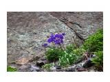Наскальная растительность..  Фотограф: vikirin  Просмотров: 1350 Комментариев: 0