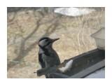 Название: Дятел2 Фотоальбом: Птицы на моем окне Категория: Природа  Время съемки/редактирования: 2008:04:03 11:50:38 Фотокамера: OLYMPUS IMAGING CORP.   - FE250/X800              Диафрагма: f/4.7 Выдержка: 10/6400 Фокусное расстояние: 222/10 Светочуствительность: 200   Просмотров: 365 Комментариев: 1