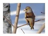 Название: DSC09956_н Фотоальбом: Птицы Категория: Животные  Время съемки/редактирования: 2017:03:21 10:27:30 Фотокамера: SONY - DSC-HX300 Диафрагма: f/6.3 Выдержка: 1/250 Фокусное расстояние: 21500/100    Просмотров: 31 Комментариев: 1