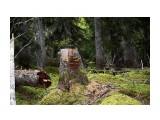 Название: Грибной пень.. Фотоальбом: 2010-2009 09 26 сб / 2008 10 3-4  Тэнге Категория: Природа Фотограф: vikirin  Время съемки/редактирования: 2010:10:10 12:09:11 Фотокамера: Canon - Canon EOS Kiss X3 Диафрагма: f/4.0 Выдержка: 1/60 Фокусное расстояние: 55/1 Светочуствительность: 400   Просмотров: 2905 Комментариев: 0