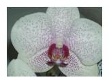 Название: Изображение 417 Фотоальбом: мои цветы Категория: Цветы  Время съемки/редактирования: 2010:09:09 22:48:37 Фотокамера: OLYMPUS IMAGING CORP.   - uD600,S600       Диафрагма: f/14.0 Выдержка: 1/100 Фокусное расстояние: 1740/100 Светочуствительность: 100   Просмотров: 232 Комментариев: 0