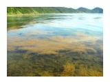 Морской виноград.В Макарьевке крупнее Фотограф: vikirin  Просмотров: 4859 Комментариев: 0