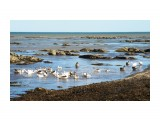 Домашние гуси в Охотском море  Просмотров: 389 Комментариев: 0