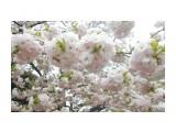 Название: DSCN4339 Фотоальбом: Япония, апрель 2019 Категория: Туризм, путешествия  Время съемки/редактирования: 2019:04:23 00:54:45 Фотокамера: NIKON - COOLPIX S3100 Диафрагма: f/3.2 Выдержка: 10/2500 Фокусное расстояние: 4600/1000    Просмотров: 226 Комментариев: 0