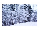 Зимой в заснеженной тайге.. Фотограф: vikirin  Просмотров: 3074 Комментариев: 0