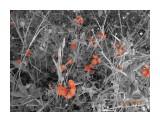 Ястрибиночка оранжевая  Просмотров: 486 Комментариев: 0