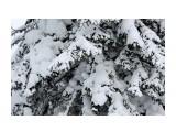 Зима на перевале.. Фотограф: vikirin  Просмотров: 1037 Комментариев: 0