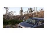 лес после урагана...  Просмотров: 879 Комментариев: