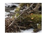 Название: Зимний гриб опенок (фламмулина) 14.11.2015г. Фотоальбом: Природа 2015г. Категория: Природа  Время съемки/редактирования: 2015:11:14 15:40:29 Фотокамера: OLYMPUS IMAGING CORP.   - SP570UZ                 Диафрагма: f/3.5 Выдержка: 10/600 Фокусное расстояние: 931/100    Просмотров: 797 Комментариев: 0