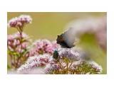 Эй ты, брысь с моего цветочка :))) Фотограф: VictorV  Просмотров: 243 Комментариев: 0