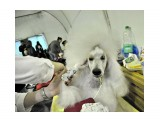 Название: Белый Фотоальбом: собаки Категория: Животные  Время съемки/редактирования: 2017:06:11 11:21:37 Фотокамера: NIKON CORPORATION - NIKON D5000 Диафрагма: f/3.5 Выдержка: 10/1000 Фокусное расстояние: 180/10    Просмотров: 305 Комментариев: 0