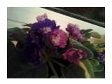 Название: Фото0304 Фотоальбом: Разное Категория: Цветы  Время съемки/редактирования: 2013:02:09 23:22:55 Фотокамера: SAMSUNG - GT-C6712 Диафрагма: f/2.6 Выдержка: 1/8 Фокусное расстояние: 278/100    Просмотров: 555 Комментариев: 0