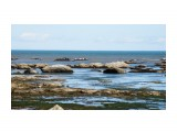 Побережье Охотского моря. Отлив.  Просмотров: 297 Комментариев: 0
