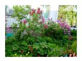 сирень цветёт  Просмотров: 415 Комментариев: 0