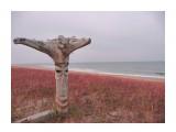 Красная трава на закате.  Просмотров: 4467 Комментариев: