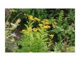 Наскальные растения Фотограф: vikirin  Просмотров: 1586 Комментариев: 0