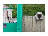 Осторожно злая собака!   Фотограф: 7388PetVladVik  Просмотров: 4267 Комментариев: 2