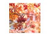 Название: 3F1CFD1D-B556-4959-8566-5DD6C741E564 Фотоальбом: Осень Категория: Природа  Время съемки/редактирования: 2021:10:16 13:22:15 Фотокамера: OLYMPUS IMAGING CORP.   - E-M1             Диафрагма: f/1.0 Выдержка: 1/640 Фокусное расстояние: 0/1    Просмотров: 48 Комментариев: 0