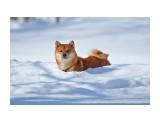 Почти снегоход )) Фотограф: VictorV  Просмотров: 1038 Комментариев: 4