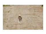 Гуляю сам по себе ) Фотограф: VictorV  Просмотров: 347 Комментариев: 1