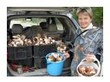 Грибы 210 литров белых грибов.  Просмотров: 1431 Комментариев: