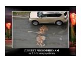 у нас другие тюльпаны Фотограф: © marka  Просмотров: 1120 Комментариев: 1