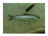 Название: DSC01238 Фотоальбом: рыбалка Категория: Рыбалка, охота  Время съемки/редактирования: 2016:12:10 06:04:46 Фотокамера: SONY - DSC-H400 Диафрагма: f/3.4 Выдержка: 1/320 Фокусное расстояние: 4400/1000    Просмотров: 378 Комментариев: 0