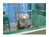 В зоопарке  Просмотров: 912 Комментариев: