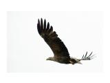охотник Фотограф: ©  marka /печать больших фотографий,создание слайд-шоу на DVD/  Просмотров: 641 Комментариев: 1