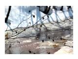 Ольховые почки над речушкой Фотограф: vikirin  Просмотров: 2704 Комментариев: 0