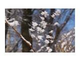 Название: _DSC5640 Фотоальбом: Зима... Категория: Природа Фотограф: VictorV  Время съемки/редактирования: 2020:12:18 20:31:40 Фотокамера: SONY - ILCA-77M2 Диафрагма: f/5.0 Выдержка: 1/6400 Фокусное расстояние: 1050/10    Просмотров: 94 Комментариев: 0