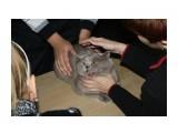 Название: А!!!  Не душите меня!  Фотоальбом: выставка кошек 29.11.2009 Категория: Животные  Время съемки/редактирования: 2009:11:29 16:53:26 Фотокамера: Canon - Canon EOS 1000D Диафрагма: f/5.6 Выдержка: 1/60 Фокусное расстояние: 55/1 Светочуствительность: 400   Просмотров: 715 Комментариев: 1