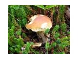 Погрызенный кем-то белый гриб  Просмотров: 87 Комментариев: 0