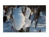 В снежной стране... Фотограф: vikirin  Просмотров: 2496 Комментариев: 0