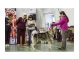 Выставка северно ездовых собак 01.12.2017  JL3A8990   Просмотров: 45  Комментариев: 0
