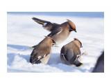 Название: _DSC6809 Фотоальбом: Птички Категория: Животные Фотограф: VictorV  Время съемки/редактирования: 2021:02:01 18:54:29 Фотокамера: SONY - ILCA-77M2 Диафрагма: f/5.0 Выдержка: 1/2500 Фокусное расстояние: 4000/10    Просмотров: 54 Комментариев: 0