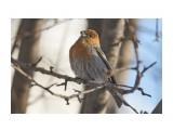 Название: DSC02815 Фотоальбом: Птички Категория: Животные Фотограф: VictorV  Время съемки/редактирования: 2020:01:12 21:56:39 Фотокамера: SONY - SLT-A99 Диафрагма: f/5.0 Выдержка: 1/1600 Фокусное расстояние: 4000/10    Просмотров: 71 Комментариев: 0