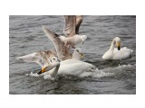 Название: птицы Фотоальбом: Лебеди прилетели Категория: Животные  Время съемки/редактирования: 2013:04:27 17:05:30 Фотокамера: Canon - Canon EOS 550D Диафрагма: f/5.6 Выдержка: 1/1000 Фокусное расстояние: 100/1    Просмотров: 557 Комментариев: 0