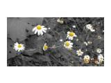 Цветы запоздалые...  Просмотров: 183 Комментариев: 0