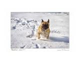Ура, первый снег!!! Фотограф: В.Дейкин  Просмотров: 322 Комментариев: 0