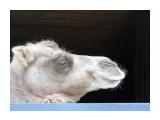 Название: Верблюд Фотоальбом: Зоопарк Категория: Животные  Время съемки/редактирования: 2016:06:28 18:19:58 Фотокамера: SONY - DSC-H400 Диафрагма: f/4.7 Выдержка: 1/100 Фокусное расстояние: 38000/1000    Просмотров: 397 Комментариев: 0