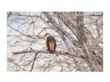 Название: Дубонос Фотоальбом: Птички Категория: Животные Фотограф: VictorV  Время съемки/редактирования: 2021:04:03 17:27:40 Фотокамера: SONY - ILCA-77M2 Диафрагма: f/6.3 Выдержка: 1/250 Фокусное расстояние: 6000/10    Просмотров: 24 Комментариев: 0