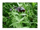 Колокольчики? В темном лесу! Фотограф: viktorb  Просмотров: 795 Комментариев: 0