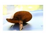 IMG_1529 Фотограф: vikirin черный грибочек  Просмотров: 773 Комментариев: 0
