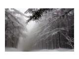 Зимний туман  Просмотров: 1571 Комментариев: