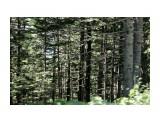 DSC01602 Фотограф: vikirin  Просмотров: 551 Комментариев: 0