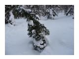 От холода и свернуться можно! Фотограф: viktorb  Просмотров: 907 Комментариев: 0