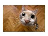 Название: Фото 32 Фотоальбом: Разное Категория: Животные  Просмотров: 990 Комментариев: 0