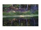 Название: DSC04244 Фотоальбом: 2015 09 Озеро в Славах Категория: Природа Фотограф: vikirin  Время съемки/редактирования: 2015:09:11 12:29:23 Фотокамера: SONY - NEX-5T Диафрагма: f/5.6 Выдержка: 1/80 Фокусное расстояние: 500/10    Просмотров: 785 Комментариев: 0